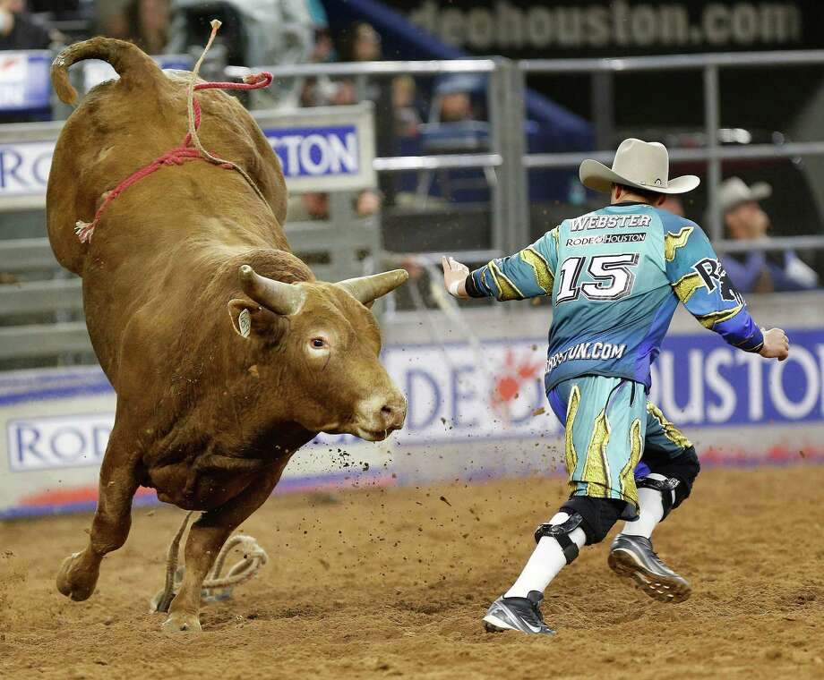Bull fighter Cody Webster tries to avoid the horns of Ol Red at the 2015 Houston rodeo. Photo: Karen Warren, Houston Chronicle / © 2015 Houston Chronicle