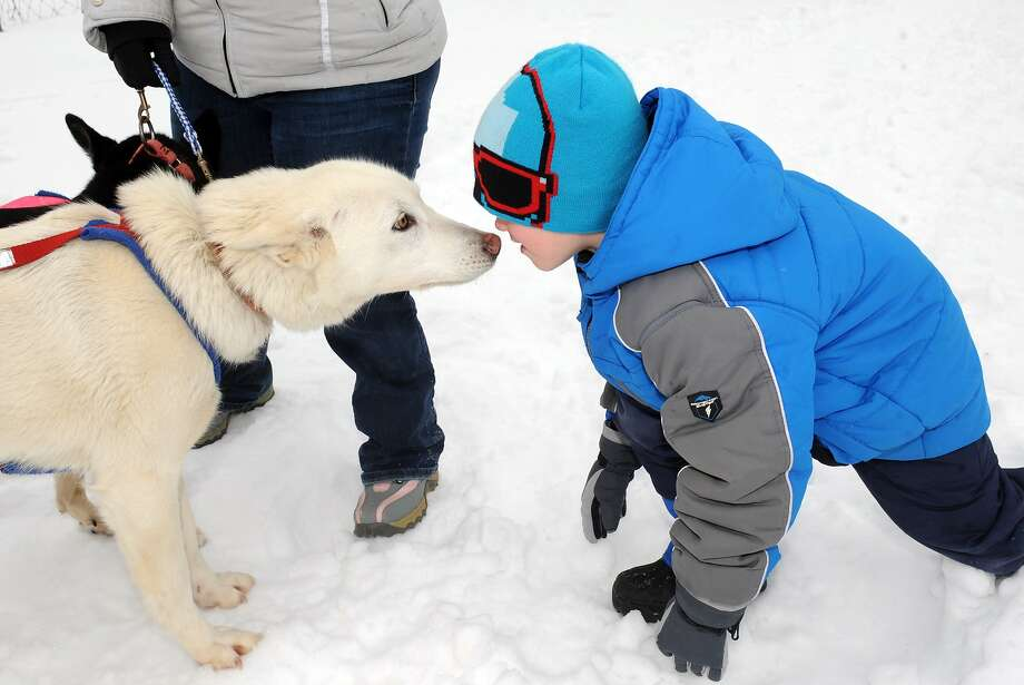 Saint Gregory's School first grade student Tadhg Swaine, right, thanks sled dog Pulli for the ride as students experienced an Iditarod style dog sled driven by musher Kate Walrath on Thursday March 5, 2015 in Loudonville, N.Y.  (Michael P. Farrell/Times Union) Photo: Michael P. Farrell, Albany Times Union