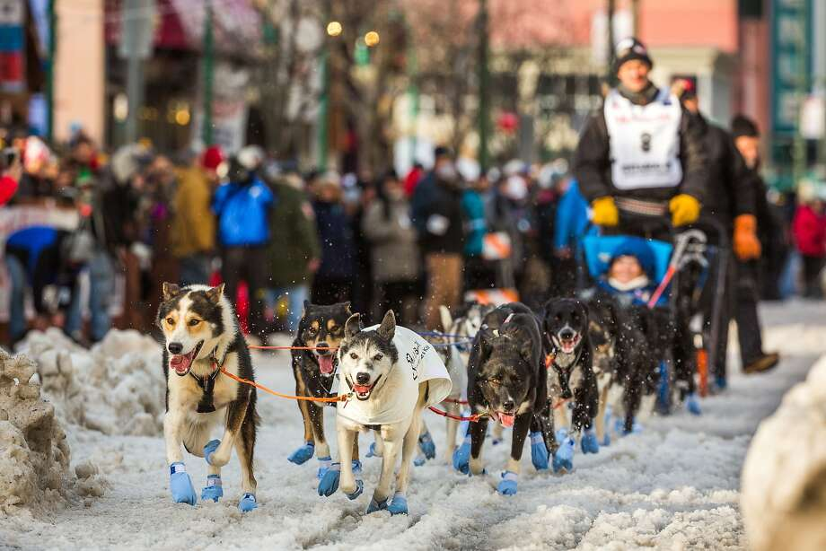 =Norwegian musher Thomas Waerner and his team head down Anchorage's 4th Avenue during the .ceremonial start of the Iditarod Trail Sled Dog Race, Saturday, March 7, 2015, in Anchorage, Alaska. (AP Photo/Alaska Dispatch News, Loren Holmes) Photo: Loren Holmes, Associated Press