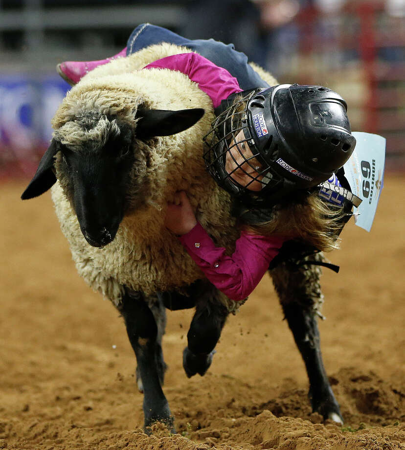 Maggie Gulihur, 6, of Sugar Land, hangs onto a sheep as she competed in the mutton bustin' event during the Houston Livestock Show and Rodeo at NRG Park, Saturday, March 7, 2015, in Houston. Photo: Karen Warren, Houston Chronicle / © 2015 Houston Chronicle