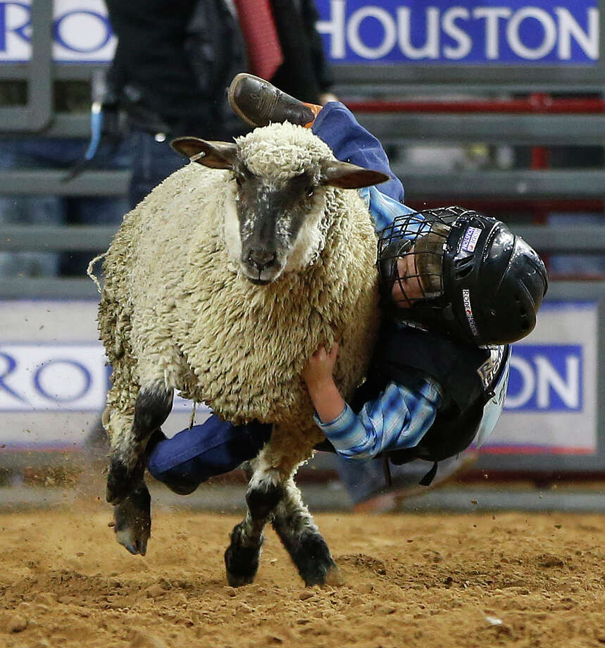 Mutton Busters At Rodeohouston Houston Chronicle