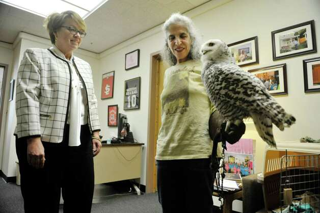 Senator Patty Ritchie, left, talks with Wendy Hall with Adirondack Wildlife Refuge and Rehab Center in Wilmington as she holds Cara, a snowy owl, at the Legislative Office Building on Monday, March 9, 2015, in Albany, N.Y.  Hall and members of Audubon New York were visiting legislators to stress the importance of increasing funding in the budget for the Environmental Protection Fund.  Cara was found injured in Malone and her wing can not be repaired because of where the break is.  People from about 70 organizations and businesses who support increasing the Environmental Protection Fund in the State Budget were in Albany on Monday talking to legislators.    (Paul Buckowski / Times Union) Photo: PAUL BUCKOWSKI / 00030940A