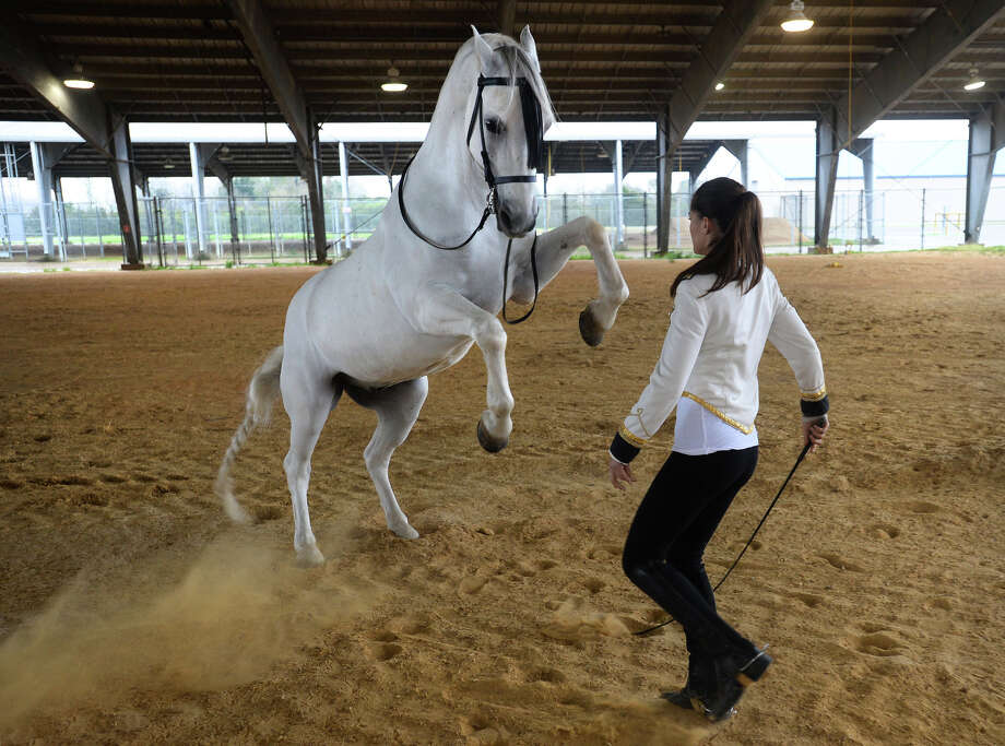 Gigi Gasser and Mozart, a 14-year-old Lipizzaner, demonstrate parts of their routine that will be performed during Wednesday's Gala of Royal Horses at Ford Park.   Photo taken Monday, March 09, 2015  Guiseppe Barranco/The Enterprise Photo: Guiseppe Barranco, Photo Editor