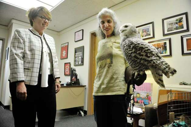 Senator Patty Ritchie, left, talks with Wendy Hall with Adirondack Wildlife Refuge and Rehab Center in Wilmington as she holds Cara, a snowy owl, at the Legislative Office Building on Monday, March 9, 2015, in Albany, N.Y.  Hall and members of Audubon New York were visiting legislators to stress the importance of increasing funding in the budget for the Environmental Protection Fund.  Cara was found injured in Malone and her wing can not be repaired because of where the break is.  People from about 70 organizations and businesses who support increasing the Environmental Protection Fund in the State Budget were in Albany on Monday talking to legislators.    (Paul Buckowski / Times Union) Photo: PAUL BUCKOWSKI, Albany Times Union / 00030940A
