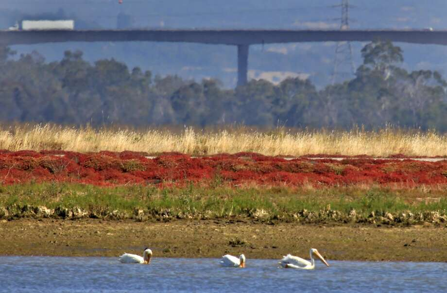 Right: The Napa River and Napa-Sonoma Wildlife Area are great for kayaking and birdwatching. Photo: Lacy Atkins, The Chronicle
