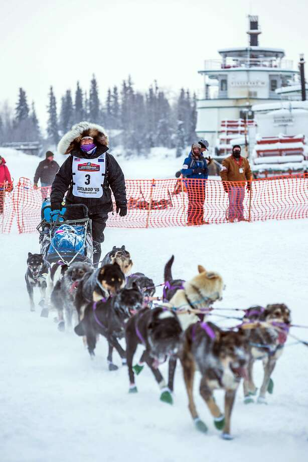 Musher Jessie Royer mushes past the Riverboat Discovery on the Chena river during the start of the Iditarod Trail Sled Dog Race, Monday, March 9, 2015, in Fairbanks, Alaska. Iditarod mushers began their 1,000-mile trek across Alaska along a new route Monday after poor trail conditions forced organizers to push the race's start north, bypassing a mountain range. (AP Photo/Alaska Dispatch News, Loren Holmes) Photo: Loren Holmes, Associated Press