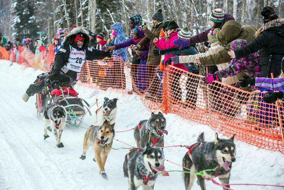 Musher Scott Janssen gives high-fives to race fans during the start of the Iditarod Trail Sled Dog Race, Monday, March 9, 2015, in Fairbanks, Alaska. Iditarod mushers began their 1,000-mile trek across Alaska along a new route Monday after poor trail conditions forced organizers to push the race's start north, bypassing a mountain range. (AP Photo/Alaska Dispatch News, Loren Holmes) Photo: Loren Holmes, Associated Press
