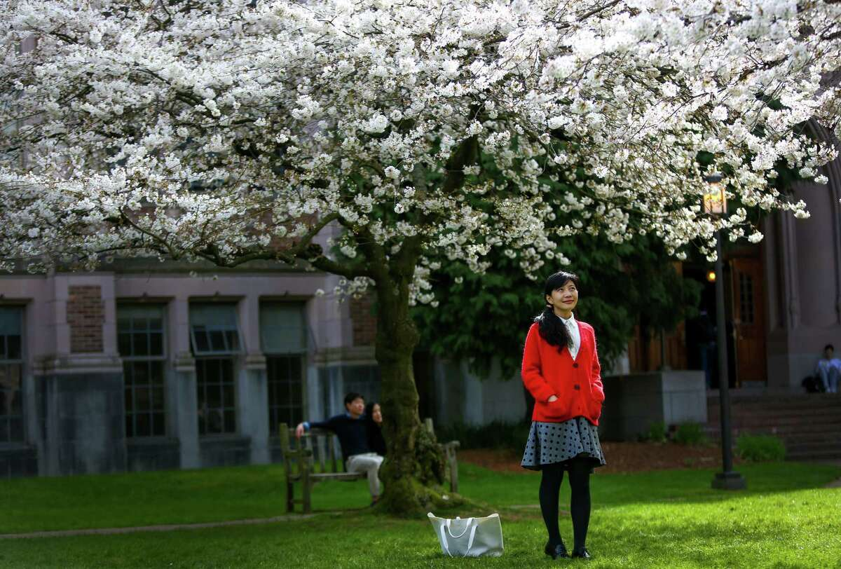 Zoey Zhang stands under blossoms as Yoshino cherry trees bloom at the University of Washington. The trees were planted in 1939 at the Washington Park Arboretum and were later relocated to the quad on the UW campus when the Evergreen Point Floating Bridge was built. The blooms have not yet peaked but are adding plenty of color to the UW campus. Photographed on Tuesday, March 10, 2015.