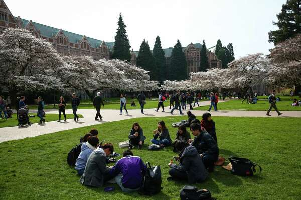 Students gather as Yoshino cherry trees bloom at the University of Washington. The trees were planted in 1939 at the Washington Park Arboretum and were later relocated to the quad on the UW campus when the Evergreen Point Floating Bridge was built. The blooms have not yet peaked but are adding plenty of color to the UW campus. Photographed on Tuesday, March 10, 2015.