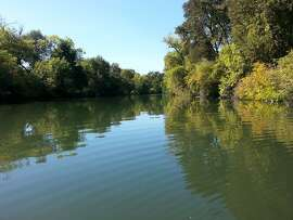 After launching your kayak or canoe at the dock near the Visitor Center at Cosumnes River Preserve, you paddle down Middle Slough to reach Cosumnes River -- classic, Delta flat-water paddling, quiet and serene, with lots of birds and wildlife