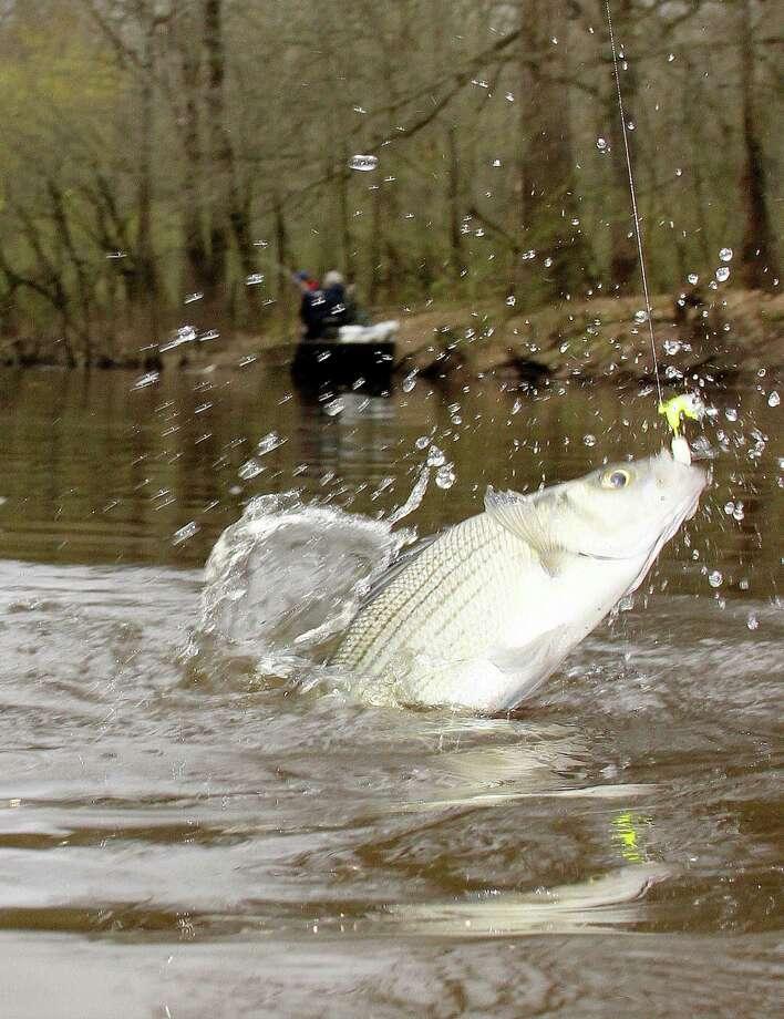Rain clouds won 39 t cast long term shadow on fishing for Bass fishing in the rain