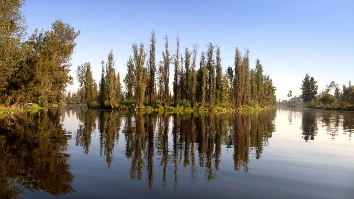 Chinampas provide land for agriculture throughout the canals.They were created by sinking cane frames into the shallow lake bed and filling them with mud, sediment, and decaying vegetation.The roots of the trees seen here help hold the sides together.