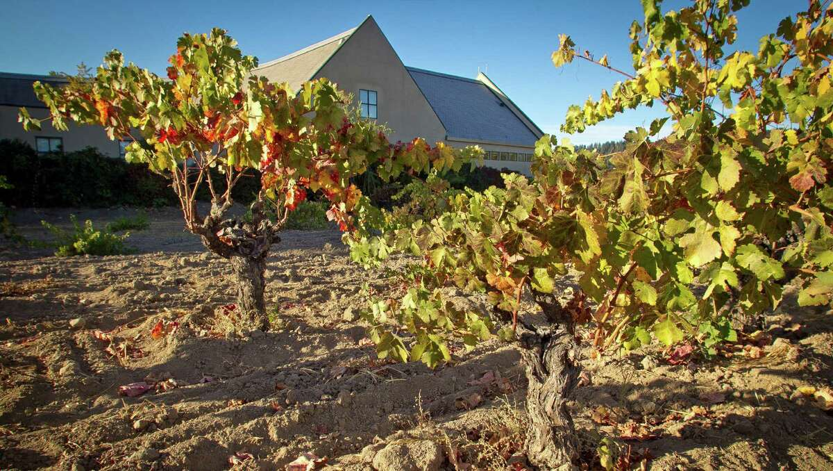 Appropriately, a vineyard grows at the St. Helena Public Library, which houses the Napa Valley Wine Library.
