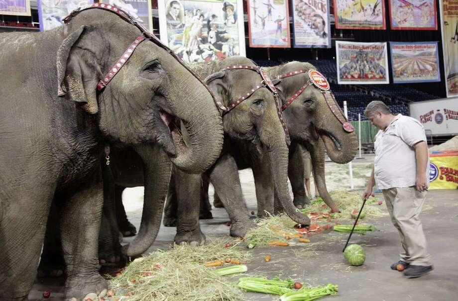 Ringling Bros. and Barnum & Bailey Circus will send its elephants, such as these at Reliant Stadium in 2012, into retirement. Photo: Mayra Beltran, Staff / © 2012 Houston Chronicle