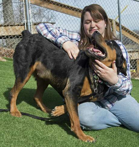 Tabitha Moore is reunited with her long lost dog, Tyra, a 7-year-old Rottweiler, at the Kansas City Pet Project in Kansas City, Mo. The dog had disappeared in 2010 from Moore's fenced yard in Warrensburg, Mo. Photo: Tammy Ljungblad /Kansas City Star / Kansas City Star