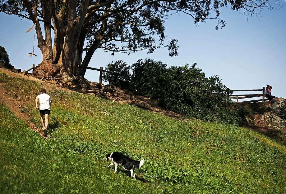 The hillside of Billy Goat Hill Park in Noe Valley San Francisco, Calif., Thursday March 12, 2015. Photo: Sophia Germer, The Chronicle