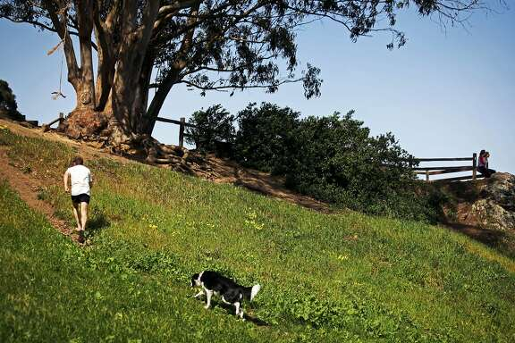 The hillside of Billy Goat Hill Park in Noe Valley San Francisco, Calif., Thursday March 12, 2015.