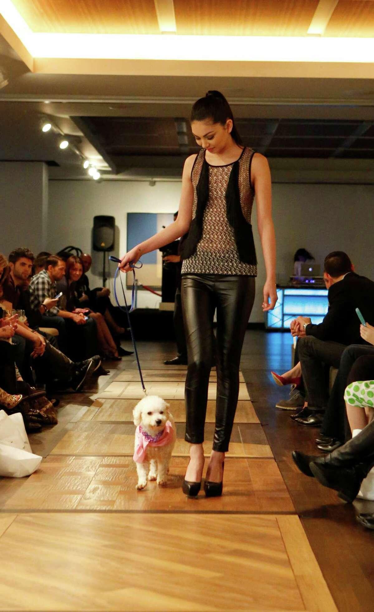 Cassie walks down the runway at Petopia's inaugural