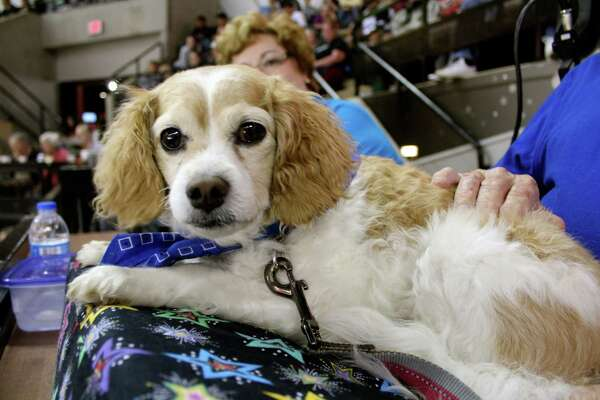 The San Antonio Rampage let the dogs out Saturday night with their pooch friendly Pucks & Paws game. Check out who brought the dog house to the ice house with our mySpy.