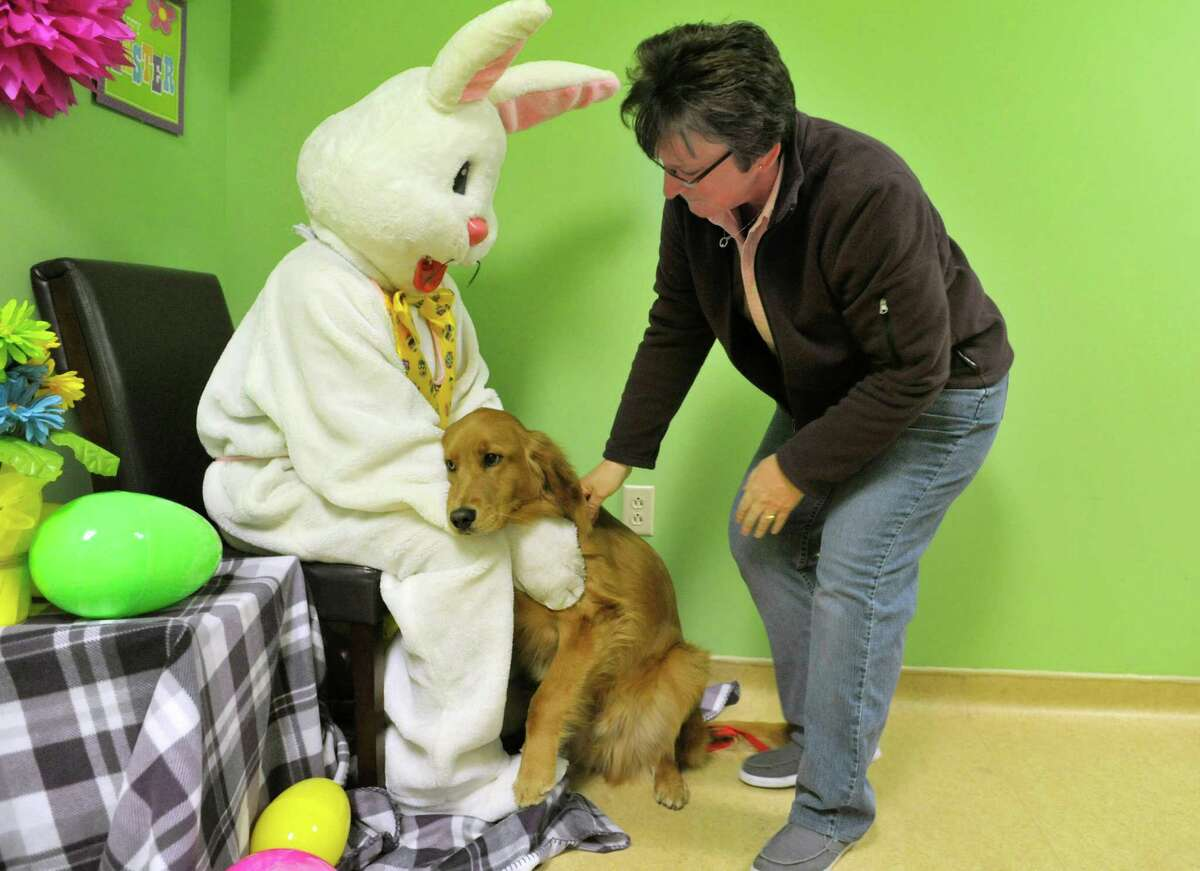 Lisa Muscatello plays the part of the Easter Bunny as Cheryl Wasley of East Greenbush gets her golden retriever Chance set up for a photo during a fund raising event at Pet Spas and Suites on Sunday, March 15, 2015, in Colonie, N.Y. (Paul Buckowski / Times Union)