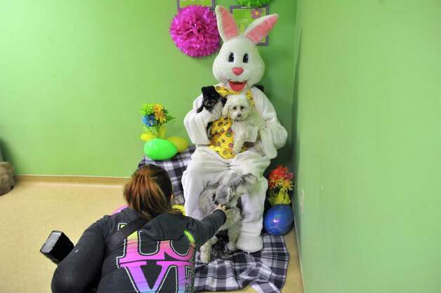 Cody Wasial, foreground, who runs Cody's Cozy Pals, sets up a photograph of Bettina Mamone's dogs, Lester, Henry and Russell, with Lisa Muscatello dressed as the Easter Bunny  during a fund raising event at Pet Spas and Suites on Sunday, March 15, 2015, in Colonie, N.Y.    (Paul Buckowski / Times Union) Photo: PAUL BUCKOWSKI / 00031042A