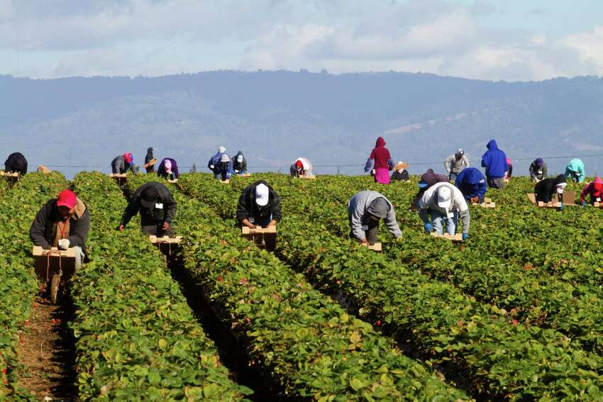 California: farm workers The most popular industry in California isn't necessarily tech or entertainment. It's agriculture; the Golden State employs farm workers at a rate of 6 times the national average.