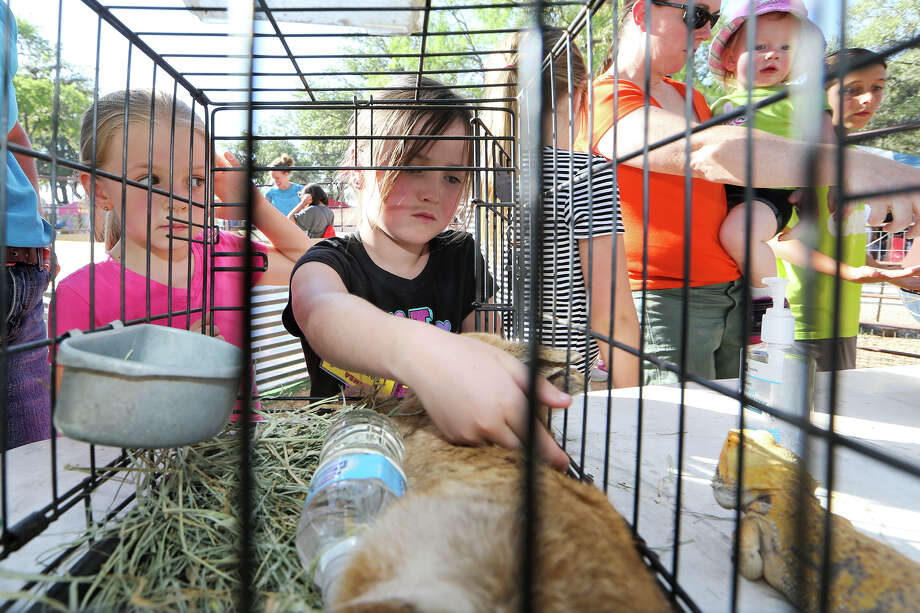 Campbell Peques, 6, pets a rabbit as her cousin, Hayden Peques (left), 6, looks on at the Happy Tails Entertainment petting zoo during the 2014 Cornyval celebration at the Helotes festival grounds in May 2014. Photo: Marvin Pfeiffer / Northwest Light / EN Communities 2014