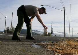 Napa Valley Sheriff Sergeant Doug Wilkinson pours water to dilute the blood of investor Emad Tawfilis who died at this spot on Solano Avenue. Robert Dahl, who recently achieved his dream of opening a winery near Napa, Calif., shot and killed his investor in a bitter legal battle and then allegedly took his own life as the police closed in.