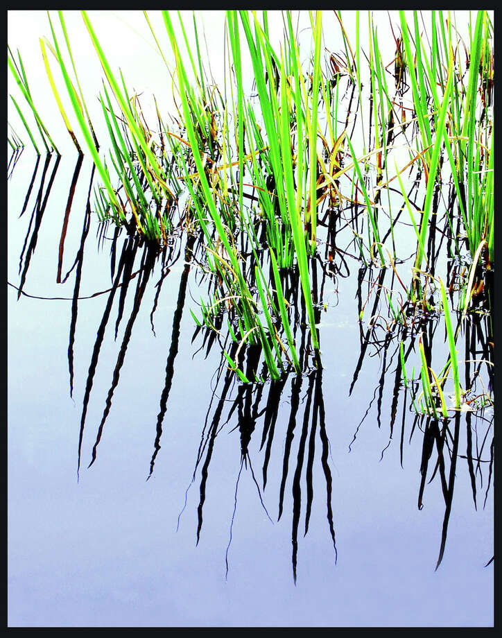 """Reeds"" is one of the photographs by Phyllis Sinrich in the new show ""A Mix of Six"" at Stamford's Loft Artists Association. Photo: Contributed Photo / Connecticut Post Contributed"