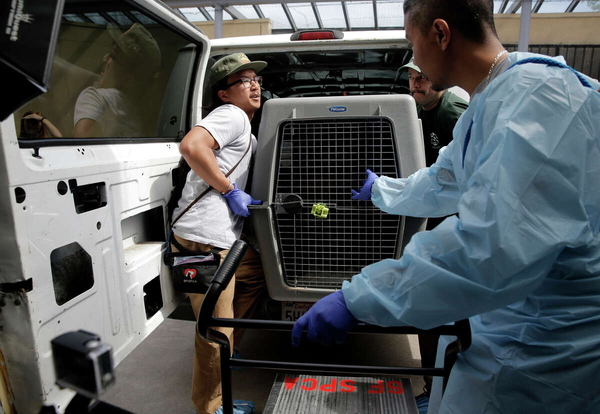 James Baybayan, (left), Adam Parascandola and Randall Adviento unload cages at the S.F. Society for the Prevention of Cruelty to Animals. dog