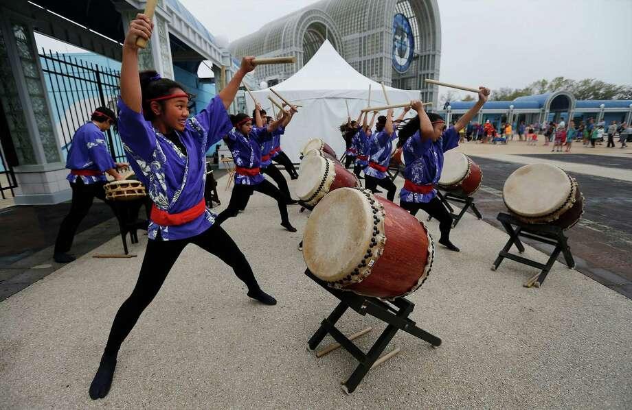 "Zenshin Daiko member Jaelyn Domingo performs on a Japanese drum known as a ""daiko""  at SeaWorld San Antonio. Photo: Photos By Kin Man Hui / San Antonio Express-News / ©2015 San Antonio Express-News"
