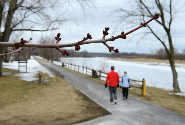 Spring buds are visible on a tree in Lions Park Wednesday lunchtime, March 19, 2014, in Niskayuna, N.Y. (Will Waldron/Times Union) Photo: WW / 00026193A