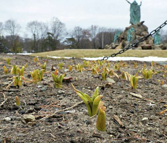 Flower beds in Washington Park Wednesday March 19, 2014, in Albany, NY.  (John Carl D'Annibale / Times Union) Photo: John Carl D'Annibale / 00026193A