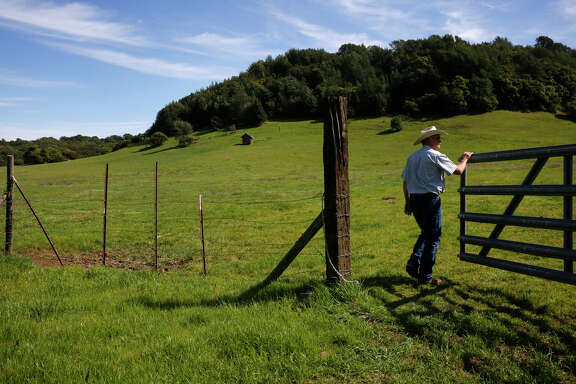 Todd Swickard checks on a recent mow job to get rid of the invasive purple star thistle at Green Valley Ranch in Napa, where he leases range land for his Five Dot Ranch cattle. Five Dot raises grass-fed beef using sustainable methods.