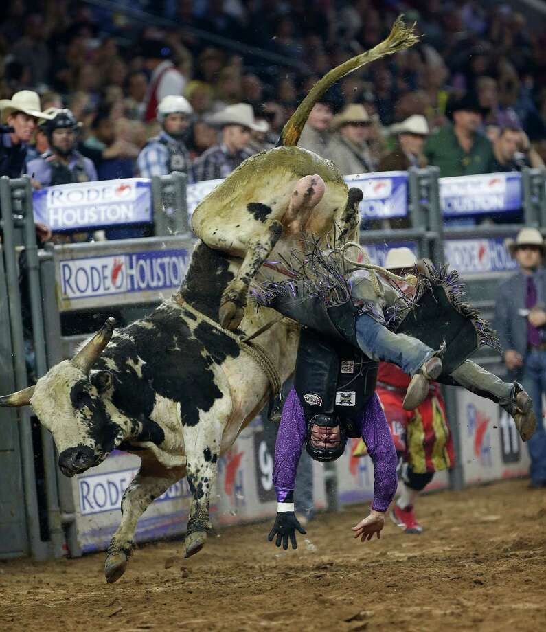 "Beau Schroeder falls off ""Richard Crannium"" the bull in the wildcard bull riding  competition during the Houston Livestock Show and Rodeo at NRG Stadium, Friday, March 20, 2015, in Houston. Photo: Karen Warren, Houston Chronicle / © 2015 Houston Chronicle"