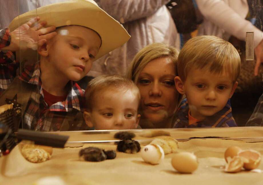 The Houston Livestock SHow and Rodeo has a lot to offer kids (and their parents!) over spring break. Click through the photos to see the options.Pictured is Jackson, Andy, Ashley and Grayson Tenney watching baby chicks in the NRG Center at the Houston Livestock Show and Rodeo Wednesday, March 11, 2015, in Houston. Photo: Jon Shapley, Houston Chronicle / © 2015 Houston Chronicle