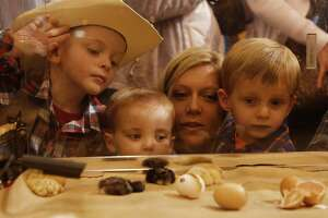Jackson, Andy, Ashley and Grayson Tenney watch baby chicks in the NRG Center at the Houston Livestock Show and Rodeo Wednesday, March 11, 2015, in Houston.