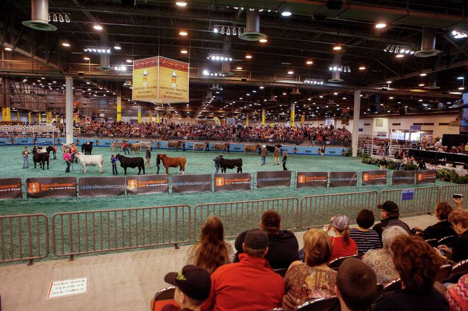 The steer show at the main ring inside the NRG Center at the Houston Stock Show & Rodeo. Photo: Spencer Selvidge /For The San Antonio Express-News / Copyright 2014, Spencer Selvidge for the San Antonio Express-News