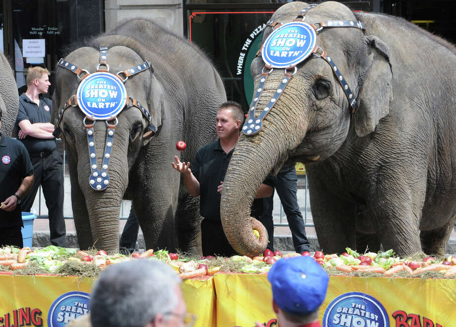 Elephants from The Greatest Show On Earth enjoy a lunch in front of the Times Union Center in Albany, N.Y. Friday May 6, 2011. (Lori Van Buren / Times Union) Photo: Lori Van Buren / 00013039A