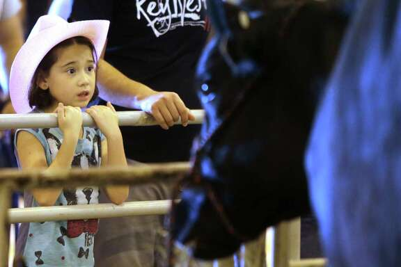 Ariadna Lithgow, 9, of Rosenberg, eyes a Holstein cow on the final day of the Houston Livestock Show and Rodeo on Sunday.