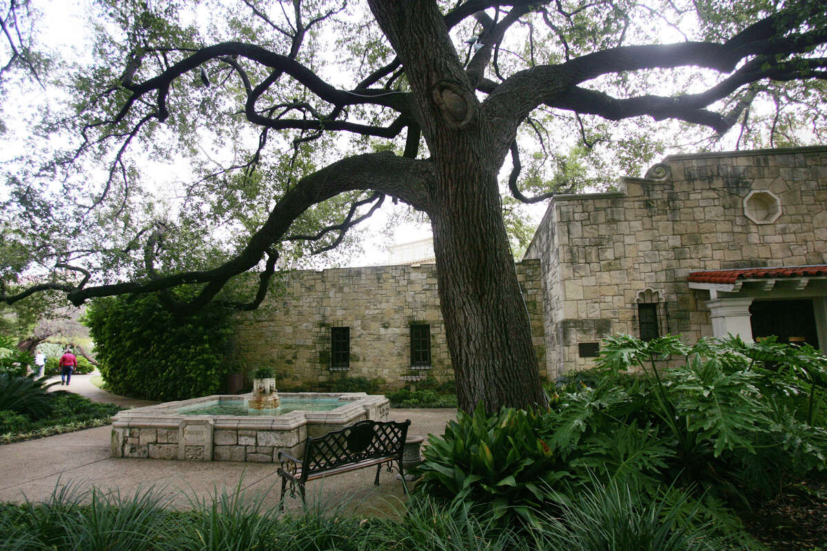 A big oak tree, shown in a 2005 file photo, towers over the DRT Library on the southern end of the state-owned Alamo complex. The library now is called the Alamo Research Center under changes brought on by the state.