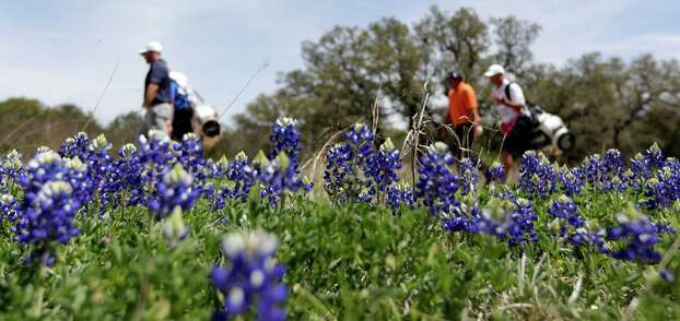 Golfers Andrew Loupe, left, and Steven Bowditch, right, with their caddies pass a patch of bluebonnets on the ninth hole during the third round of the Texas Open golf tournament, March 29, 2014. Photo: Eric Gay /Associated Press / AP
