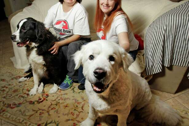 Darcie LeBoff, left, with a Newfoundland named Scarlet, and Gideon Grafton, right, with a Great Pyreneess named Seraph, pose at Jurrasic Bark Rescue Wednesday, Feb. 4, 2015, in Missouri City.   ( Melissa Phillip / Houston Chronicle )