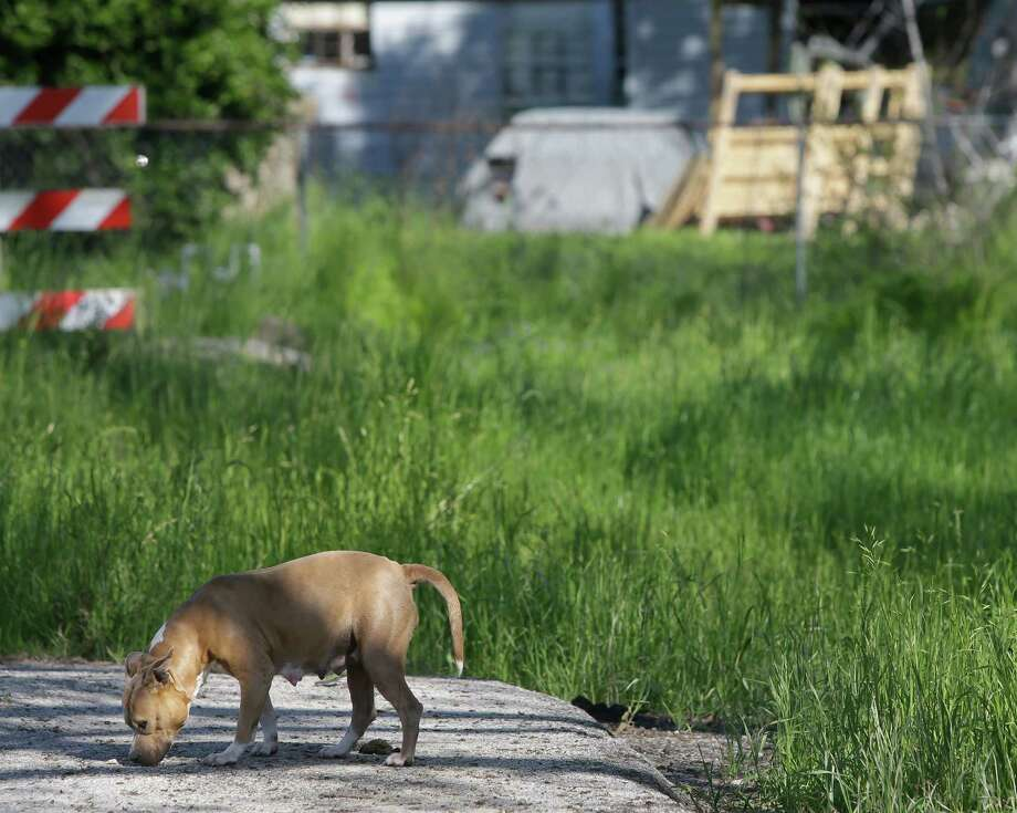 A stray dog in Sunnyside. Photo: Melissa Phillip, Houston Chronicle / © 2014  Houston Chronicle