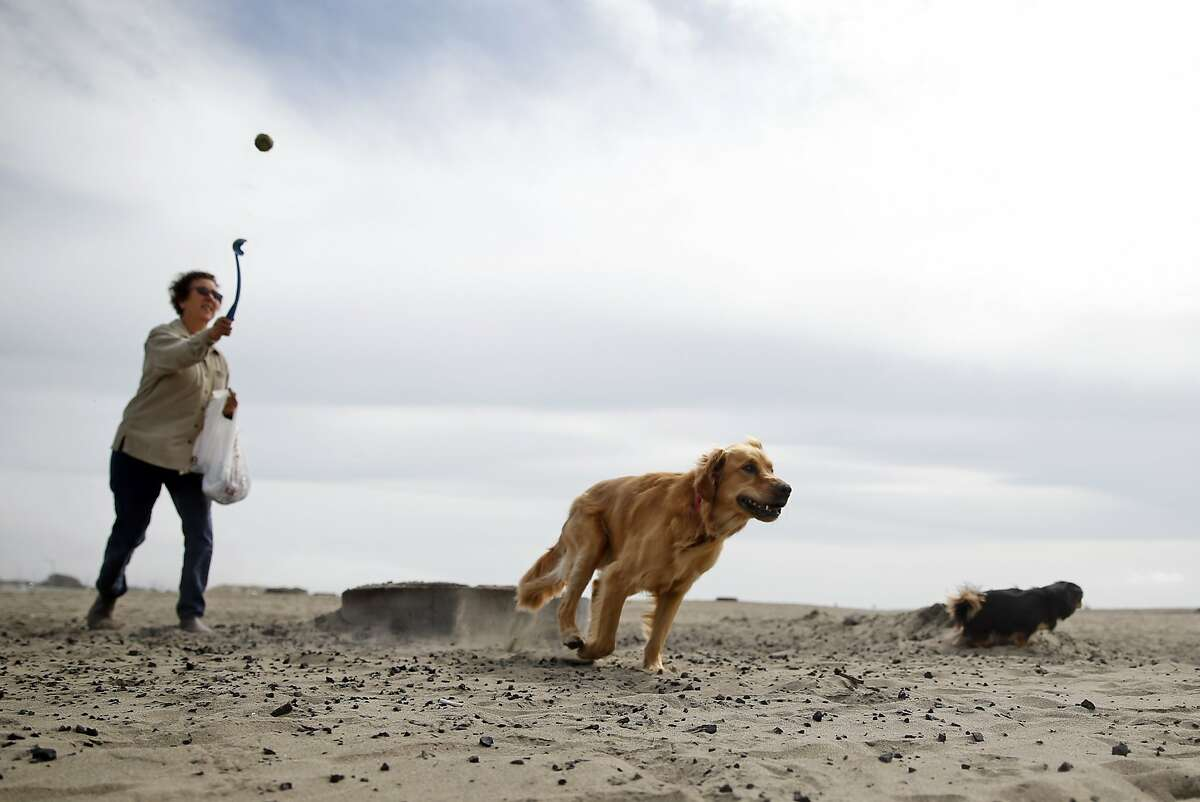 Ocean Beach: Dogs are allowed off-leash everywhere except in the Plover Protection Area from Sloat Blvd. north to Stairwell 21 where leashes are required all year except from May 15 to July 1. For latest information