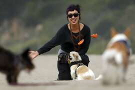 Dog walker Victoria Millan, owner of Bonesy, plays with her clients' dogs on Ocean Beach in San Francisco, Calif., on Tuesday, March 24, 2015. During walks, Millan lets her dogs run free on the less busy parts of the beach.
