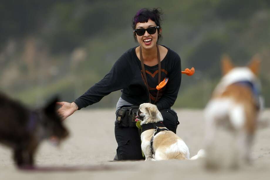 Dog walker Victoria Millan, owner of Bonesy, plays with her clients' dogs on Ocean Beach in San Francisco, Calif., on Tuesday, March 24, 2015. During walks, Millan lets her dogs run free on the less busy parts of the beach. Photo: Scott Strazzante, The Chronicle