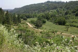 Lake Chabot park offers peaceful springtime retreats - Photo