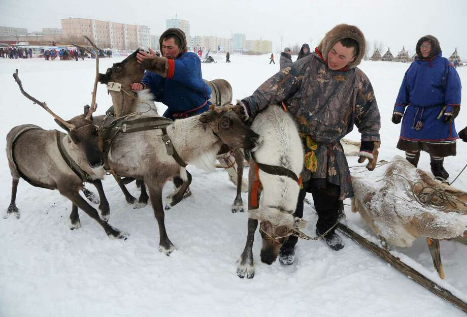In this photo taken on Sunday, March 15, 2015, Nenets men prepare for reindeer races at the Reindeer Herder's Day holiday in the city of Nadym, in Yamal-Nenets Region, 2500 kilometers (about 1553 miles) northeast of Moscow, Russia. This year, when the holiday was celebrated for the 20th time, dozens of reindeer-driven sleds took part in the race. Photo: Dmitry Lovetsky, Associated Press / AP