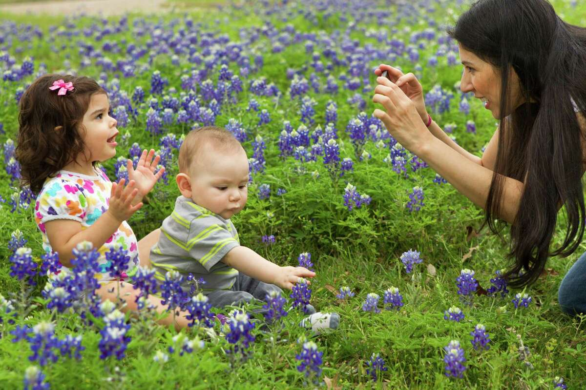Marcella Arredondo takes photos of her niece, Thalia Begin, 2, and her son Alec Arredondo, 8 months, in a patch of bluebonnets along Westcott near Prague on Thursday, April 3, 2014, in Houston. Arredondo said she had been trying to take bluebonnet photos of the children for a while, but everywhere she went was too crowded.